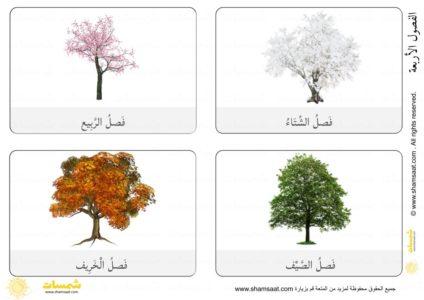 اخلاف شكل الشجرة في الفصول الاربعة 5 Flowers Plants Dandelion