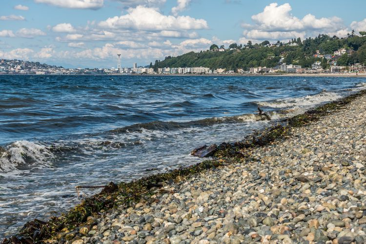 Alki Beach The Complete Guide With