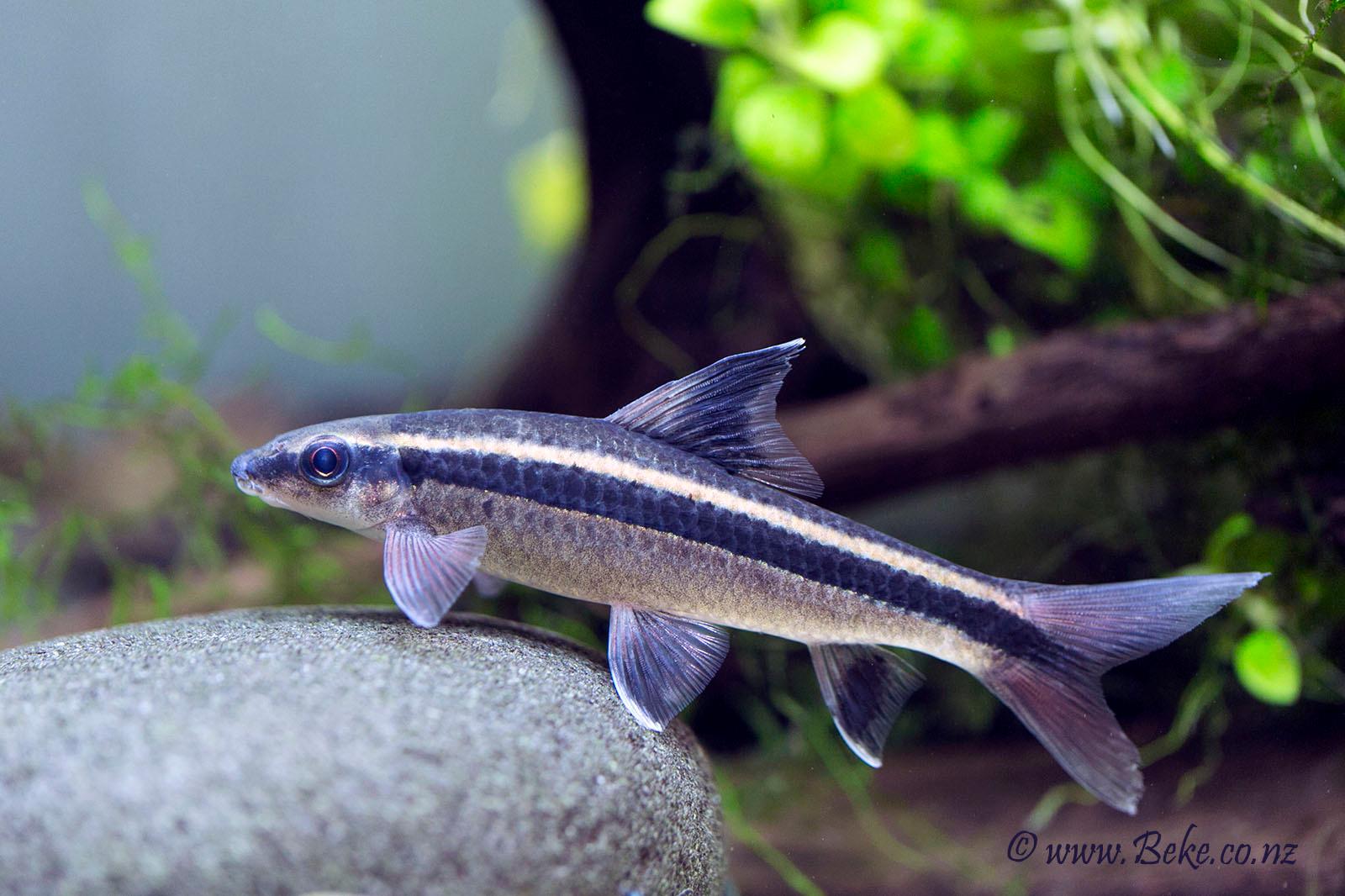 Pin By Kathy Sacksteder On Tanked Fish Aquarium Fish Fish Pet
