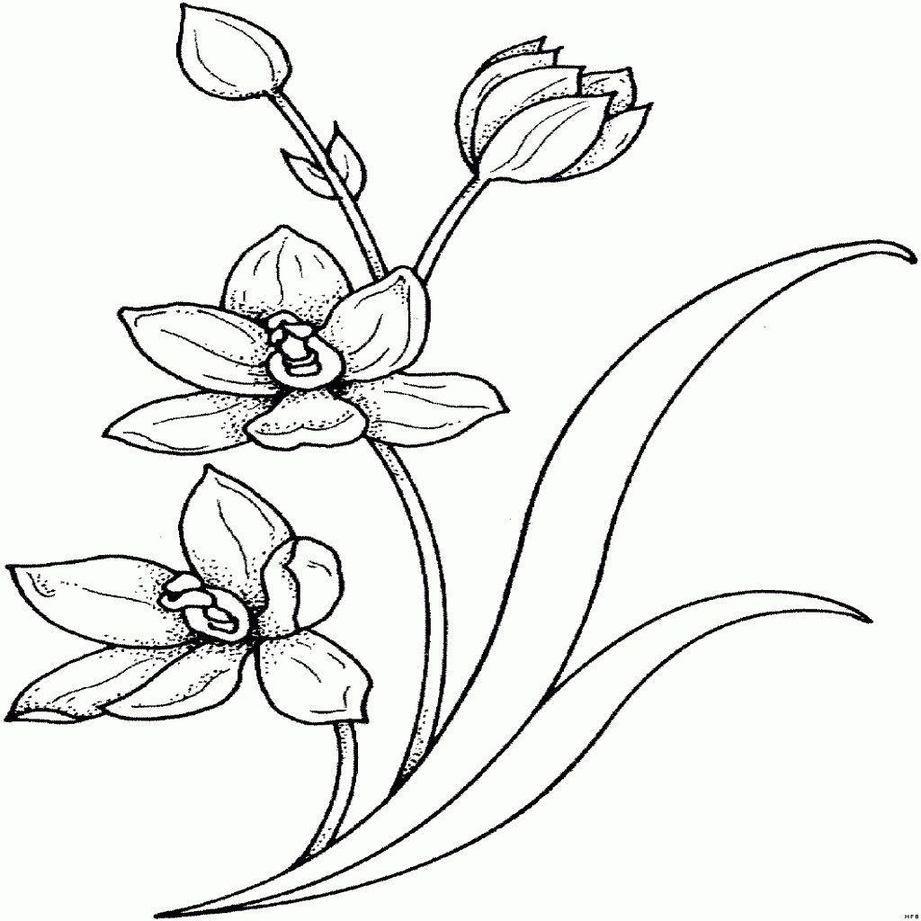 98 Einzigartig Blumenranken Zum Ausdrucken Das Bild Kinder Bilder Tattoo Motive Blumen Ausmalbilder Malvorlagen Blumen