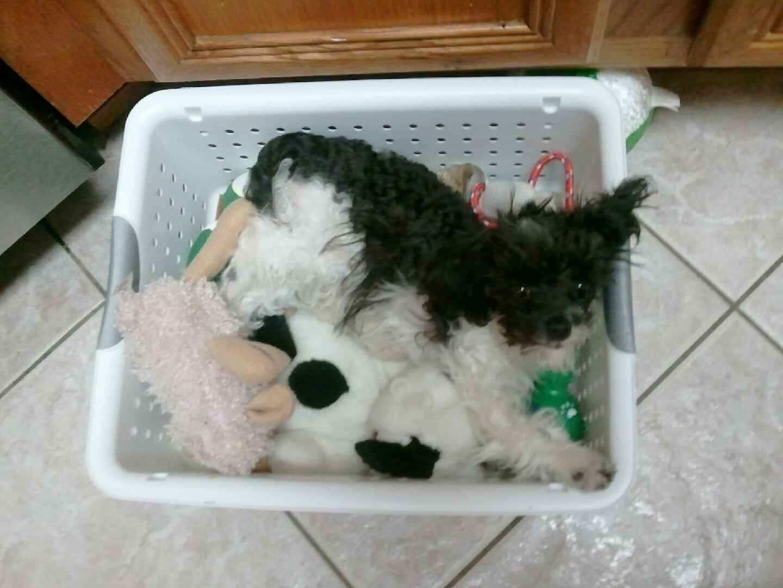 Hasil gambar untuk dog sleep in boxes
