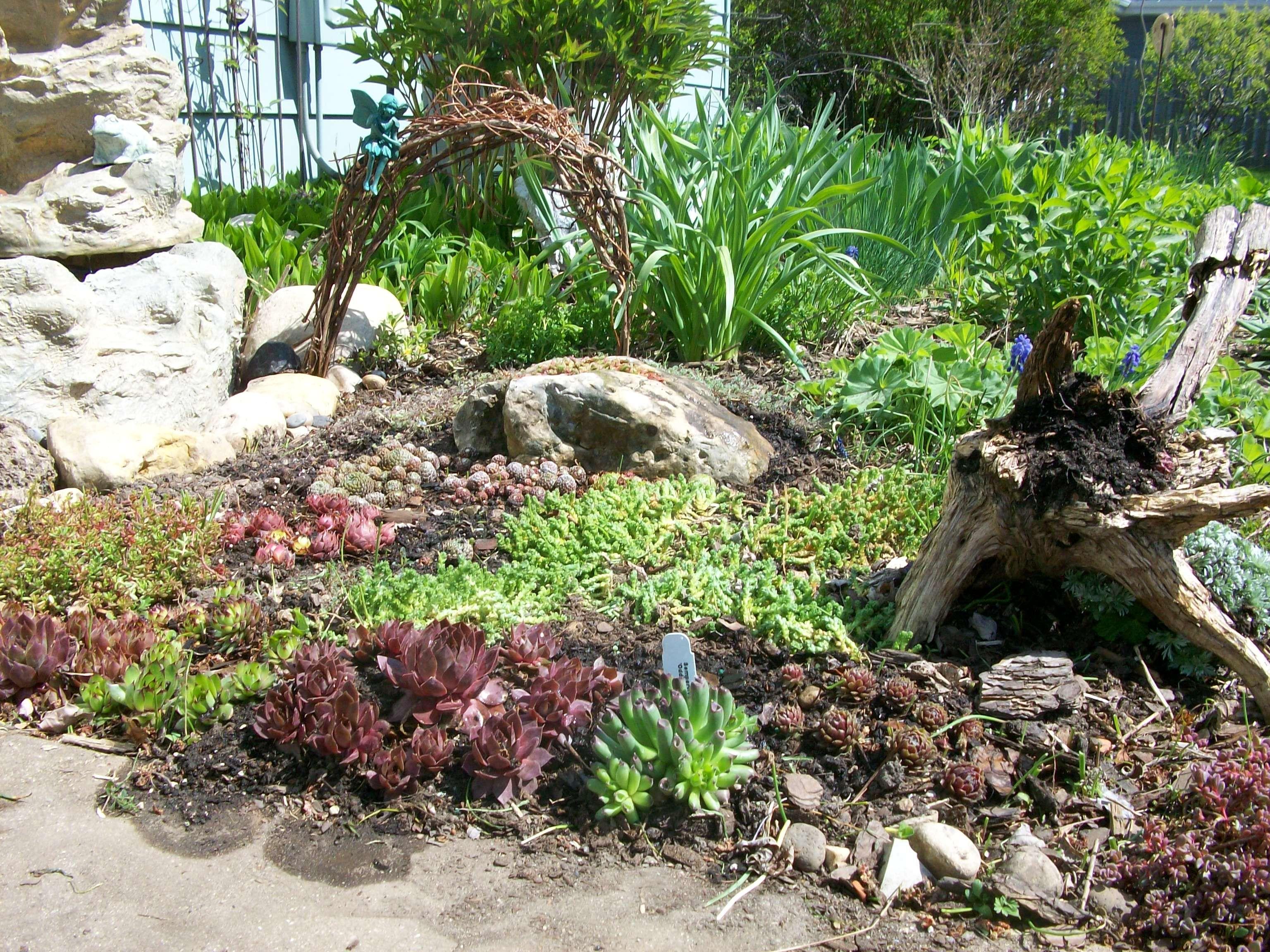 My mini rock garden | Small Spaces | Pinterest | Gardens, Garden ...