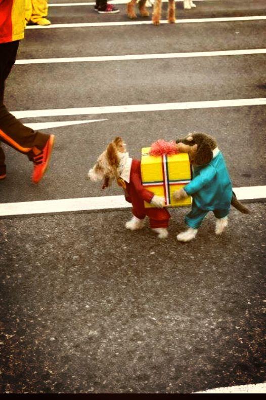 Carnaval dog