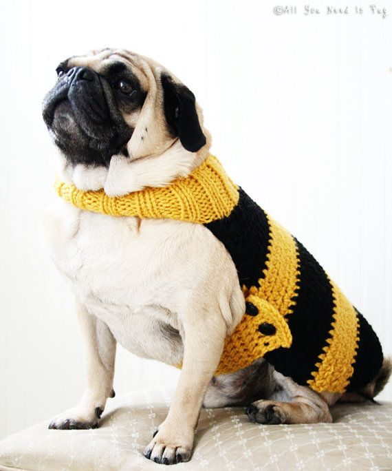 Bumble Bee Dog Sweater | Animals in Hats (and Things) | Pinterest