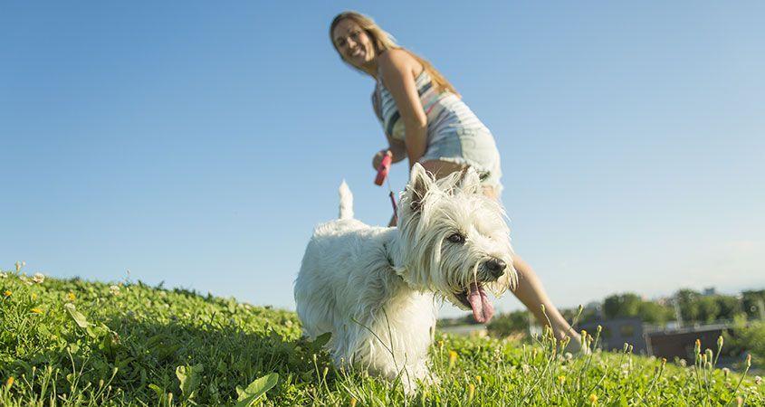 Teaching Dogs Not To Pull On Leash Puppies Dog Behavior Dog Walking