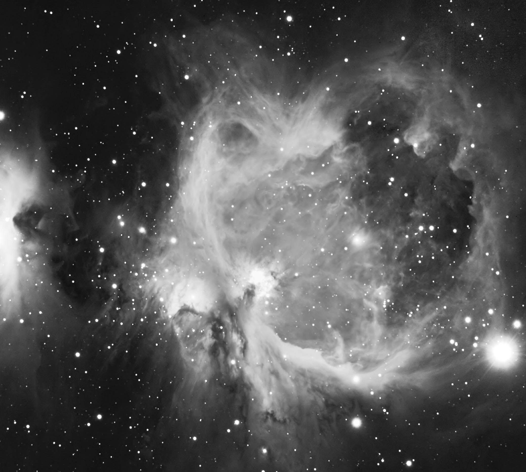 51 best Amaryllis images on Pinterest | Beautiful flowers ... |Pretty Nebula