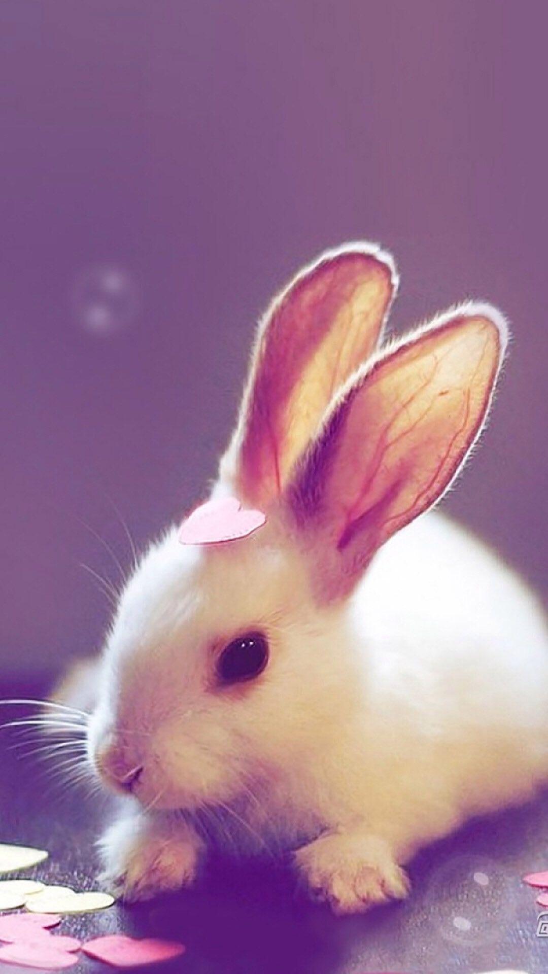 Bunny Rabbit Phone Wallpaper Animals Animal Wallpaper Cute Animal Pictures