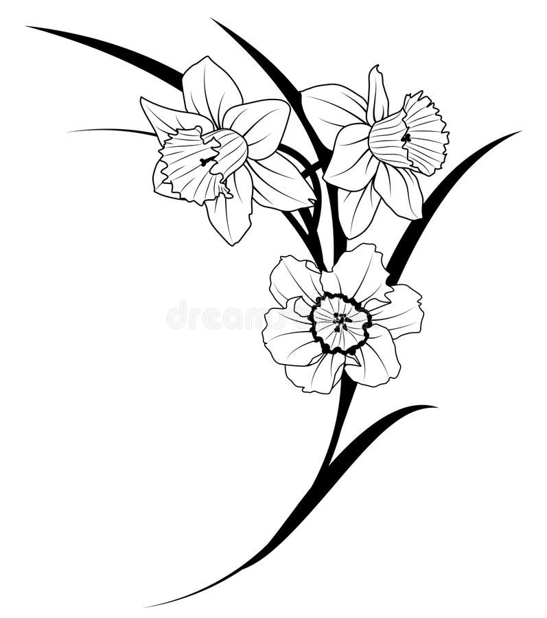 Narcissus Vector Illustration Of Narcissus In Black And White Colors Vector Illustration Narcissus Flower Tattoos Daffodil Tattoo Flower Vine Tattoos