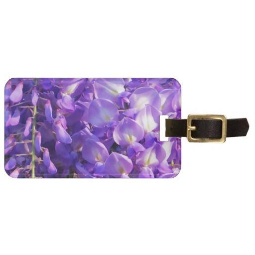 Pretty purple Wisteria flowers
