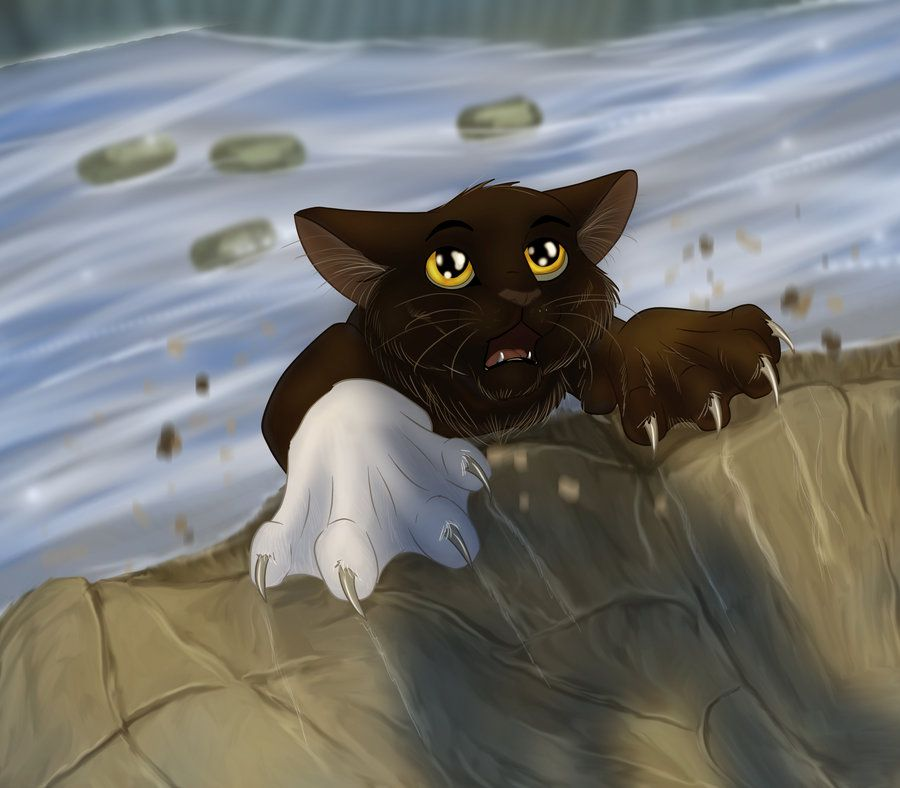 Warriors Fire And Ice Pinkbunnygirl43: Whiteclaw's Death. (He's The Poor Riverclan Cat That Died