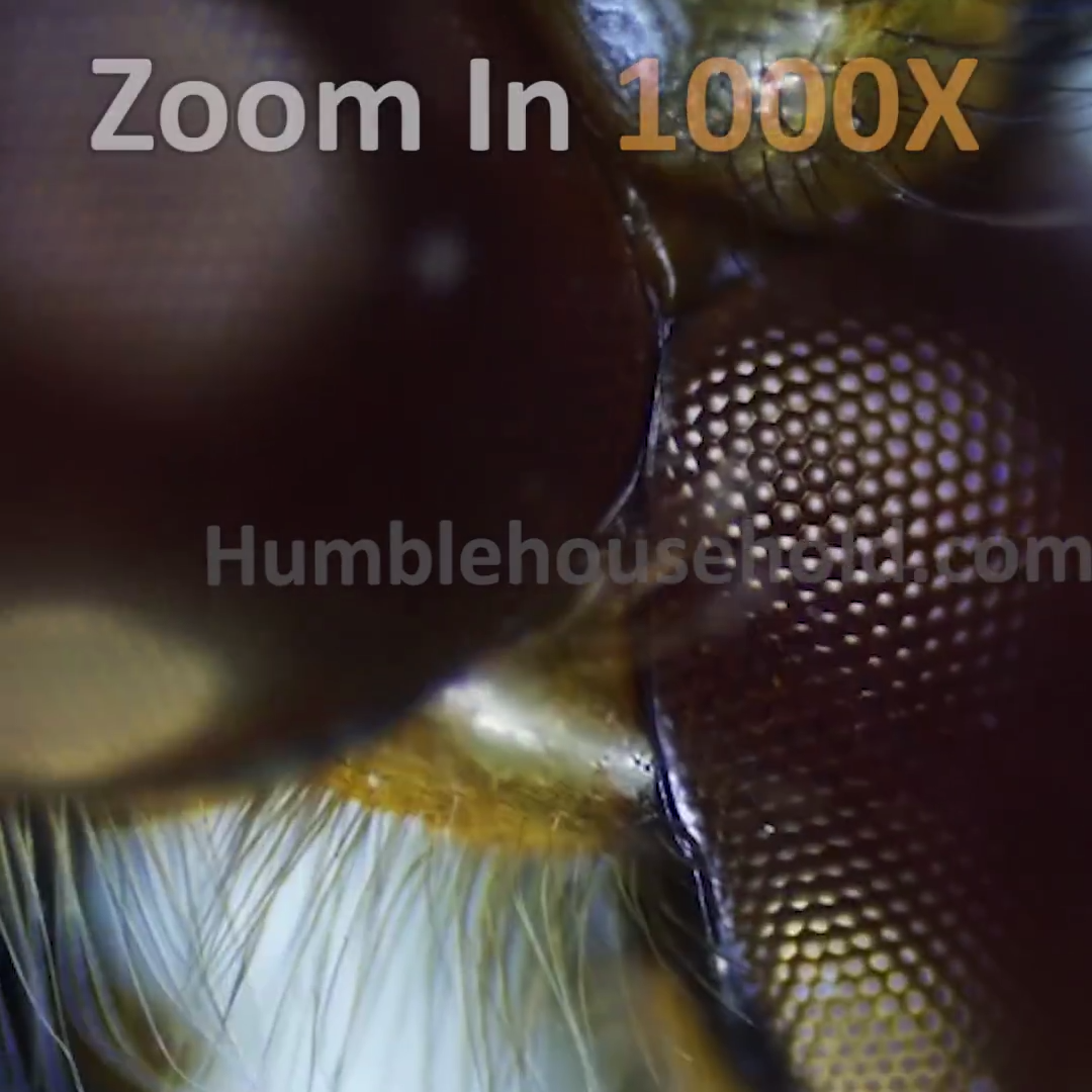 Worlds First Portable Hd Microscope Camera