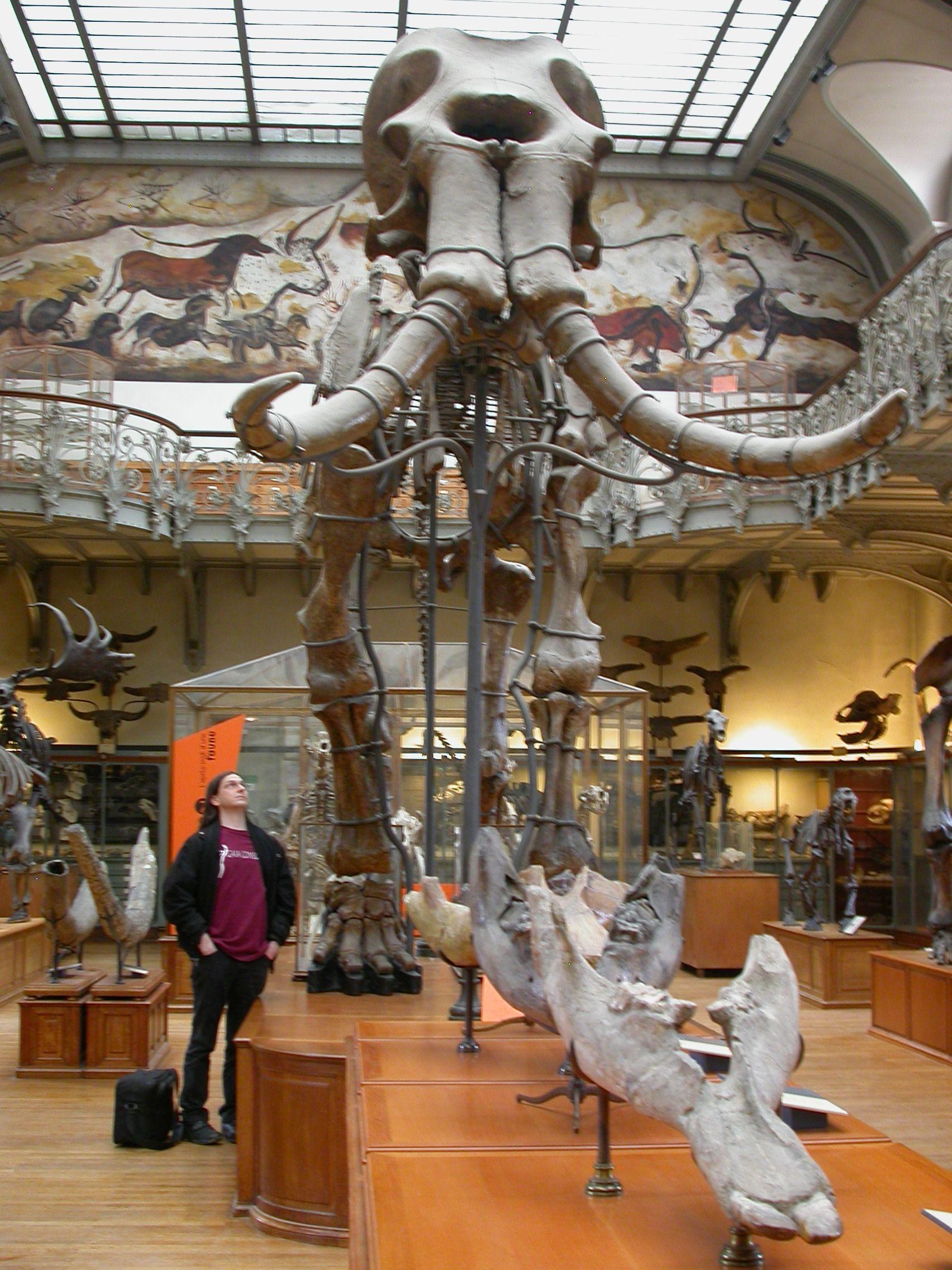 2011 Regina Brown Undergraduate Student Fellowship | Prehistoric
