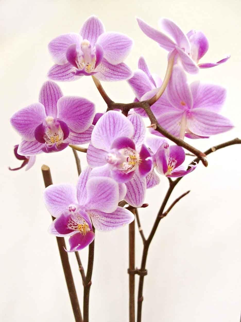 Gambar Bunga Bergerak Untuk Powerpoint Tips Memotret Bunga