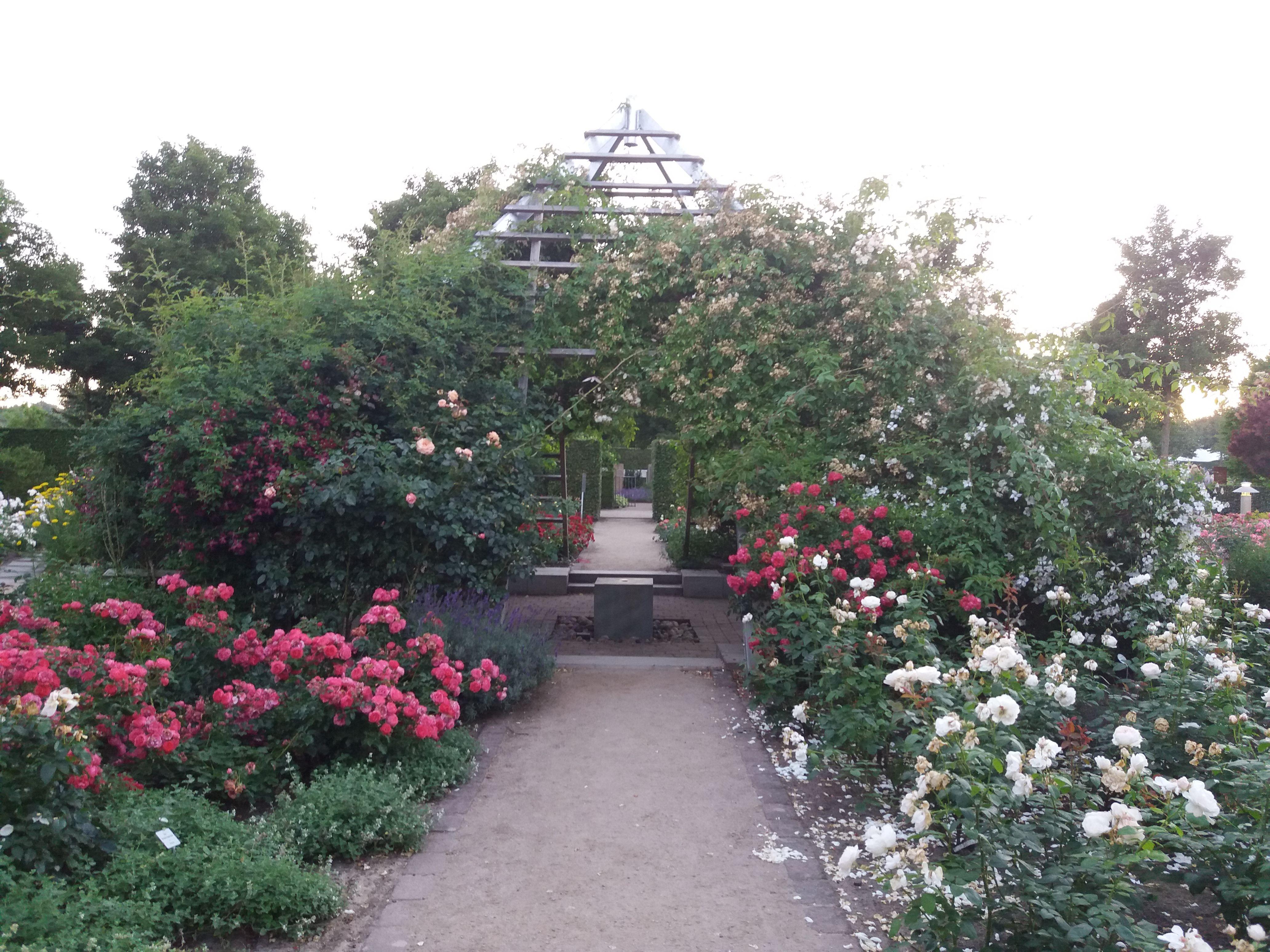 Gartenimpressionen Aus Dem Park Der Garten In Bad Zwischenahn Garten Gartengestaltung Gartenkunst Pflanzen Gartendeko Sidewalk