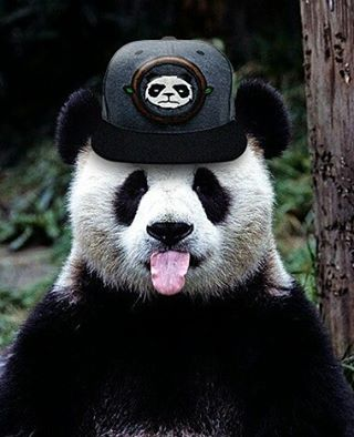 WEBSTA @ opandabambu - Um panda com um boné do panda, você só vê aqui mesmo!Adquira agora o seu boné #tamboril e fique no estilo do panda!#abareta #bone #bones #cap #hats #headwear #amor #love #loucosporbones #snapback #strapback  #hat  #streetwear #fashion #model #gorras #love #amor #panda #pandabambu #pandalove #panda #wear