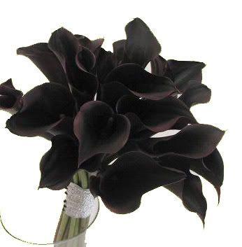 Black Calla Lily Flower Bulbs Bakker Bulb Flowers Black Flowers Black Garden