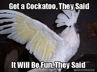 Get A Cockatoo They Said It Will Be Fun They Said Meme Generator At Memecreator Org Cockatoo Memes Funny Birds