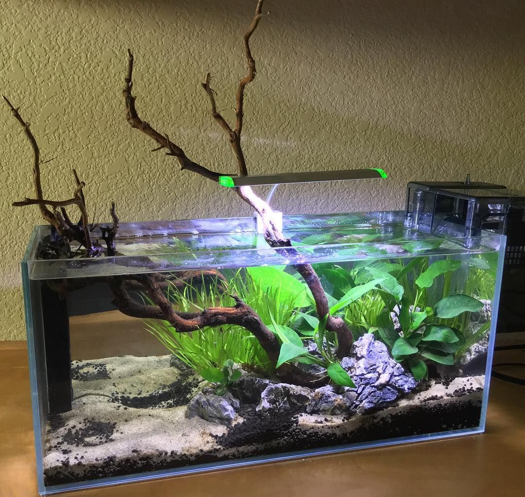 671 Likes 22 Comments Jessica A Betta World On Instagram Display Tank Reveal Some Final Tweaking To B Aquarium Fish Aquascape Aquarium Aquarium Garden