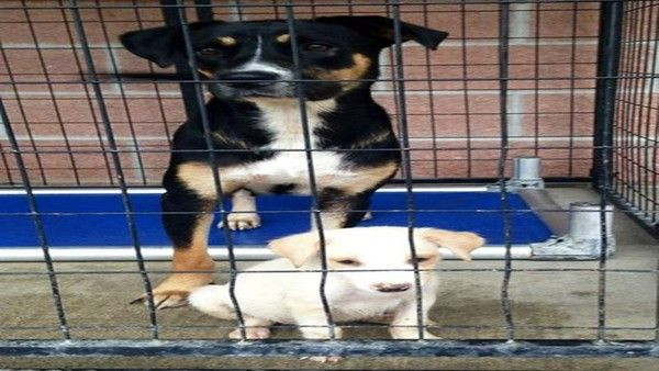 All three mother dogs were euthanized today by the City of