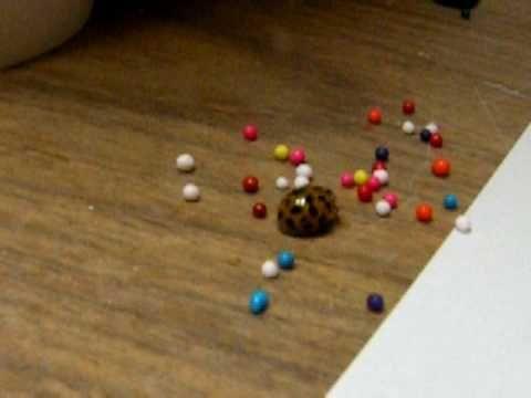 A Ladybugz Playin' With Sprinklez