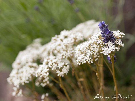 Nicht hacken bringt Segen: 10 pflegeleichte Pflanzen für Faule. #pflegeleichtepflanzen