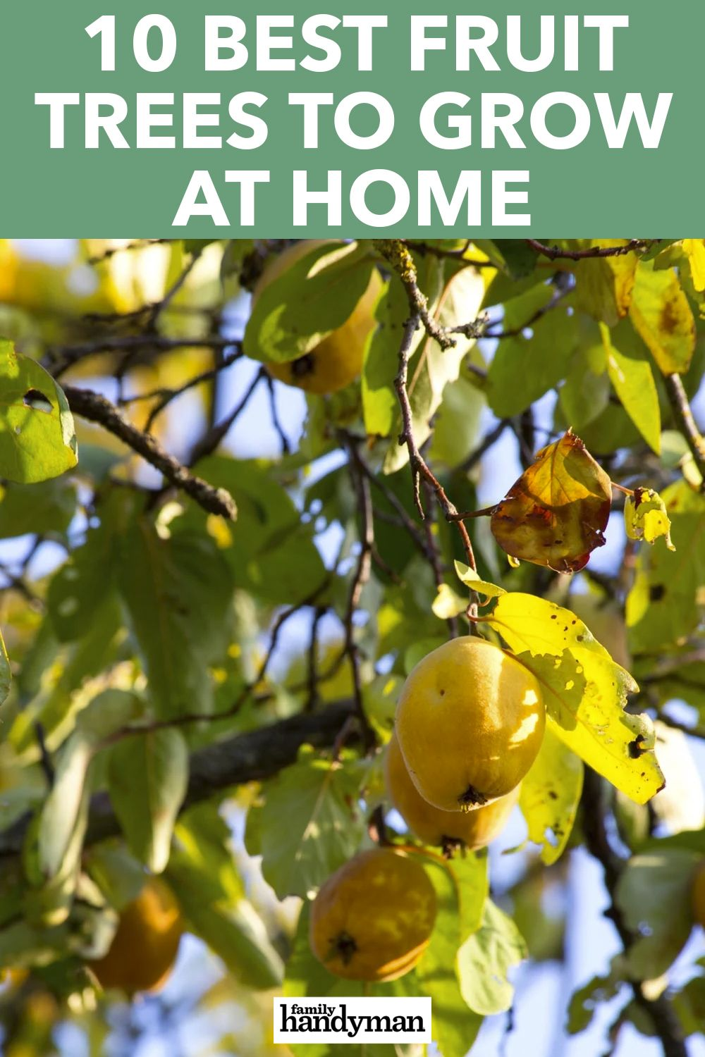 10 Best Fruit Trees To Grow At Home Fruit Trees Best Fruits Fruit