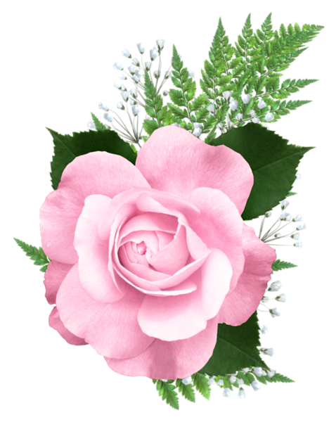 Pink Rose Png Transparent Picture Pink Rose Png Flower Clipart Rose