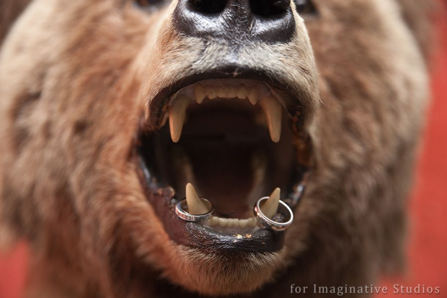 bear in billiards room with rings Relationships Pinterest