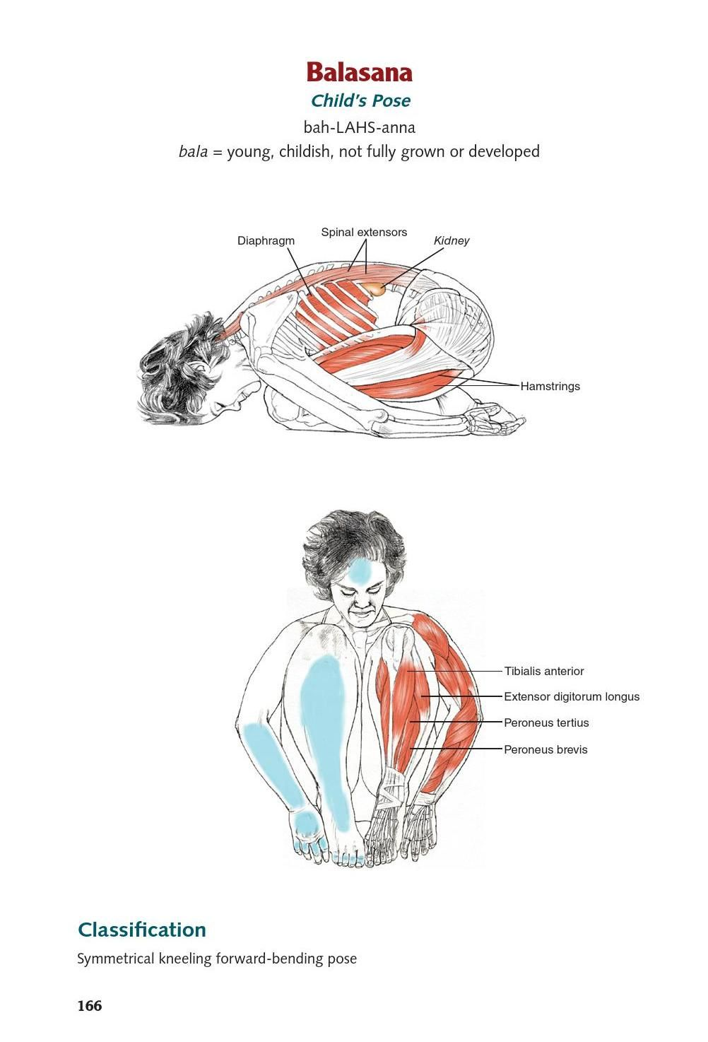 ClippedOnIssuu from Yoga Anatomy extended ed. by Lesie Kaminoff clip ...