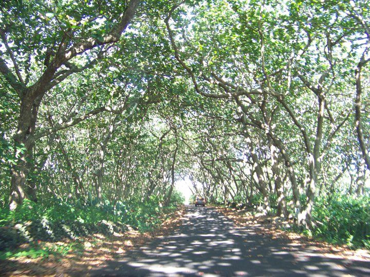 Road To Hana, Maui.... This was an amazing drive