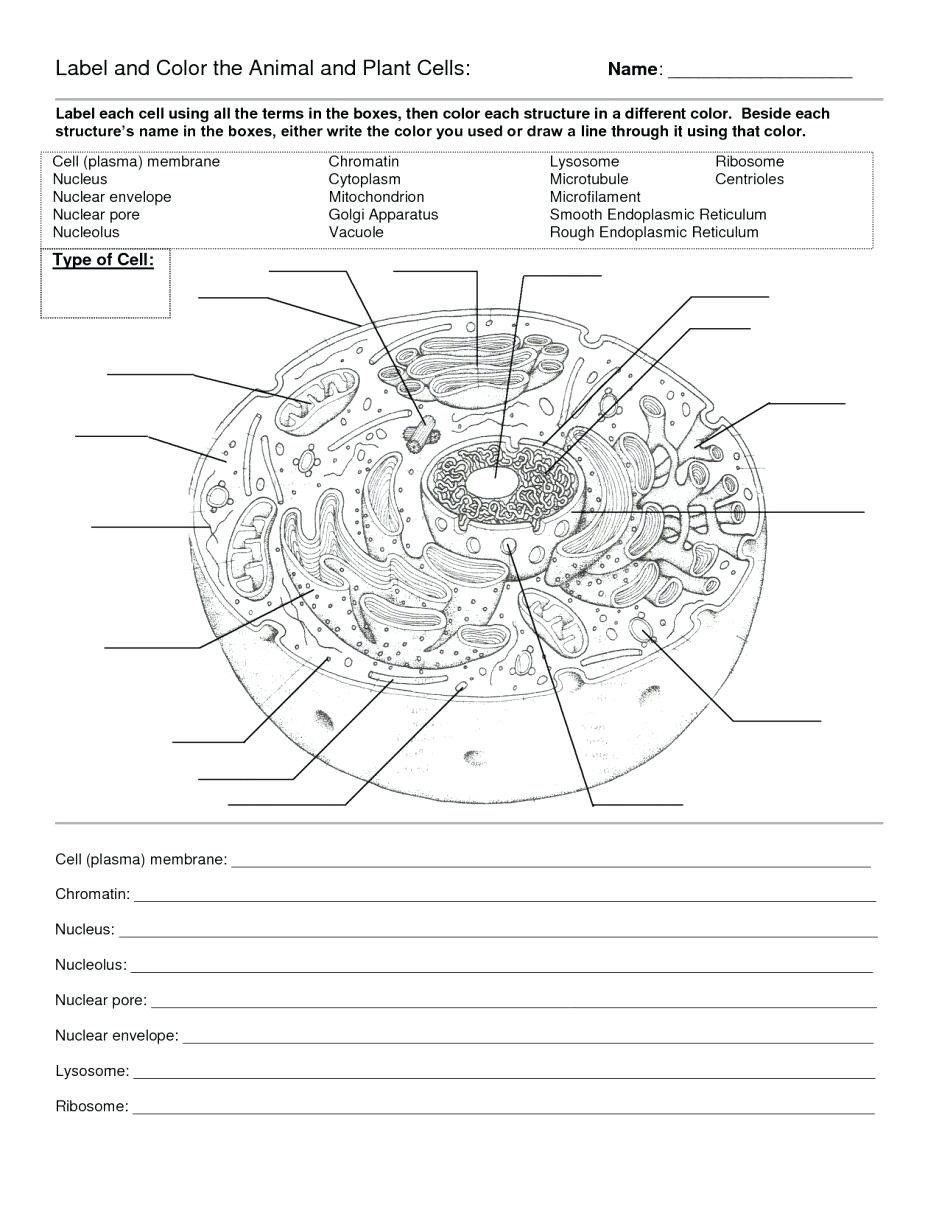 Cell Membrane Coloring Worksheet Answer Key Fresh Cell Coloring Hitcolor Cells Worksheet Plant Cells Worksheet Animal Cells Worksheet