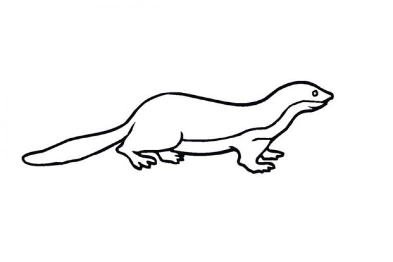 Ratel Honey Badger Coloring Page The Ratel Honey Badger Mellivora Capensis Also Known As The Ratel Is The Only Species I Honey Badger Coloring Pages Color
