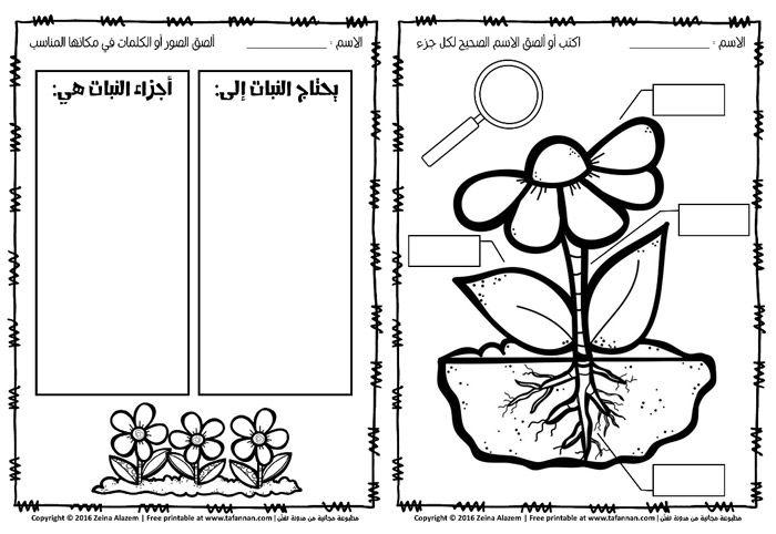 أوراق عمل النبتة الجميلة ماذا تحتاج وكيف تنمو عن وحدة النبات للصف الأول Hebrew School Blog Posts Blog