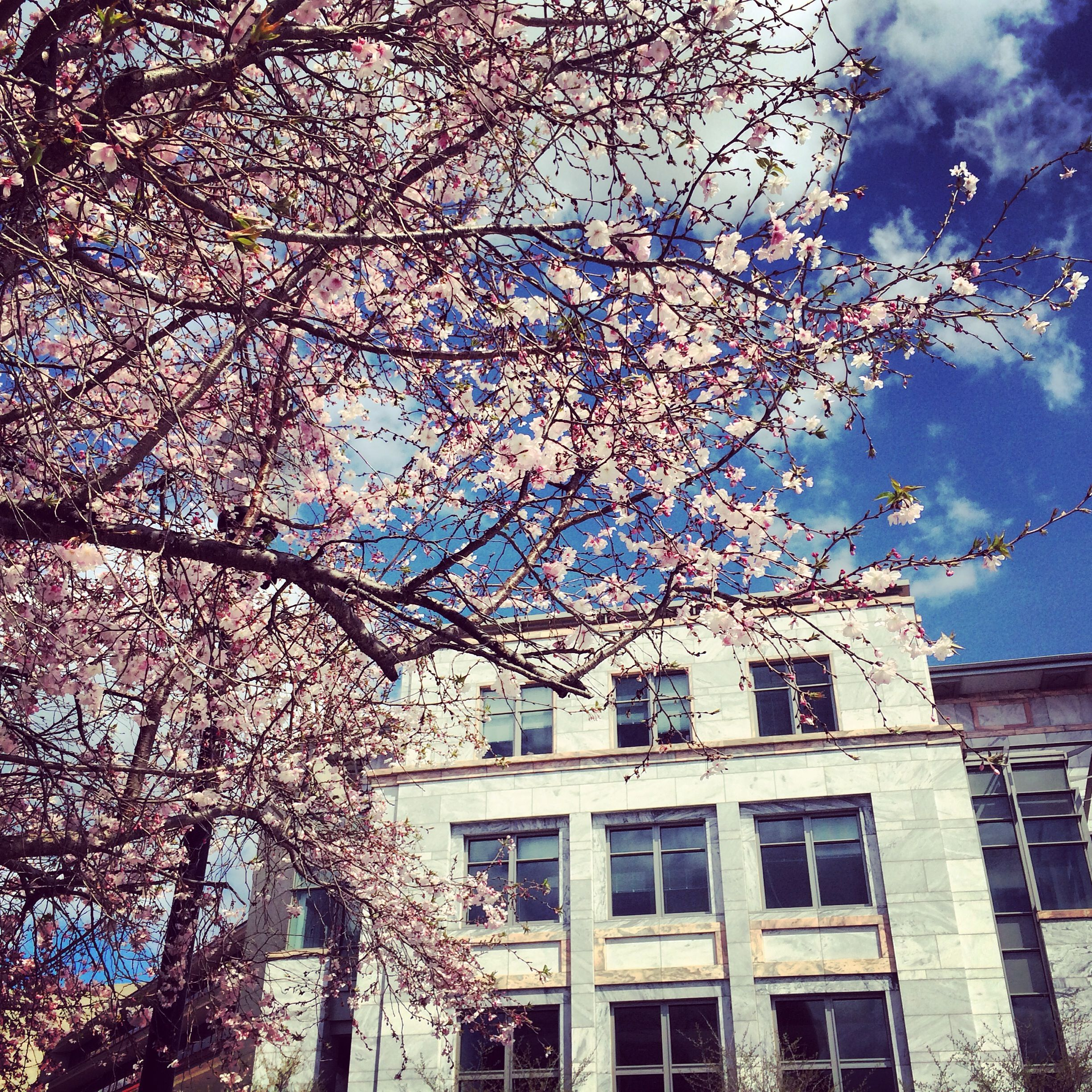 Spring featuring #Emory Med School