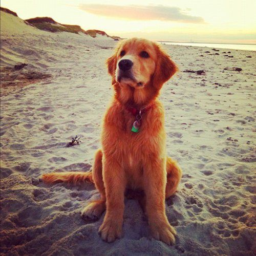 Pin By Alessandra Stival On Dogs Dogs Cute Dogs Cute Puppies