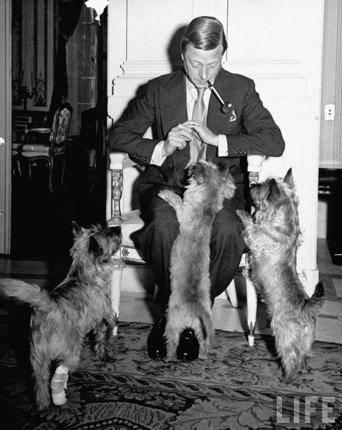 Duke Of Windsor With His Cairn Terriers My First Dog And Best