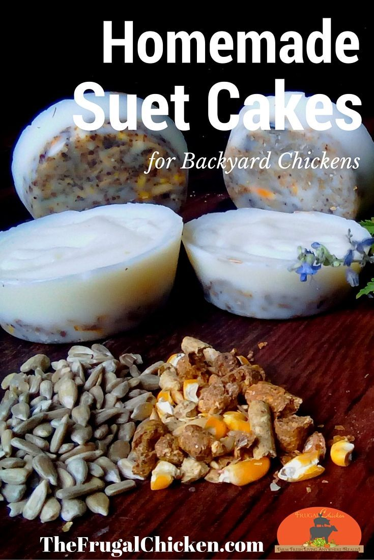 Homemade Suet Cakes For Chickens Great Boredom Busters