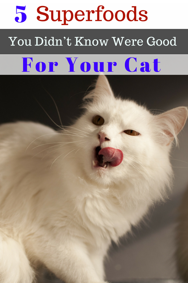 5 Foods You Didn't Know Were Good For Your Cat (With ...