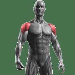 جدول تمارين كمال الاجسام 5 ايام و نظام غذائي لتضخيم العضلات Workout Routine For Men Arnold Schwarzenegger Workout Workout For Beginners