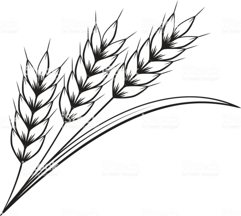Clip Art Pictures Of Wheat Yahoo Image Search Results Clip Art Pictures Wheat Pictures Art Pictures
