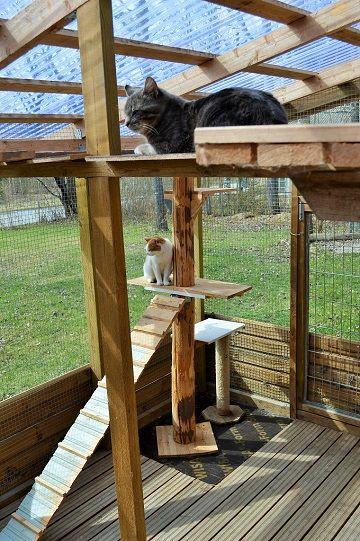 Kissan Ulkotarha Google Haku Garden Paths Cool Pets Paths