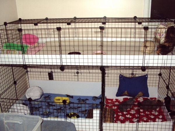Two 2x5 stacked cages guinea pig cage examples for 2 story guinea pig cages for sale