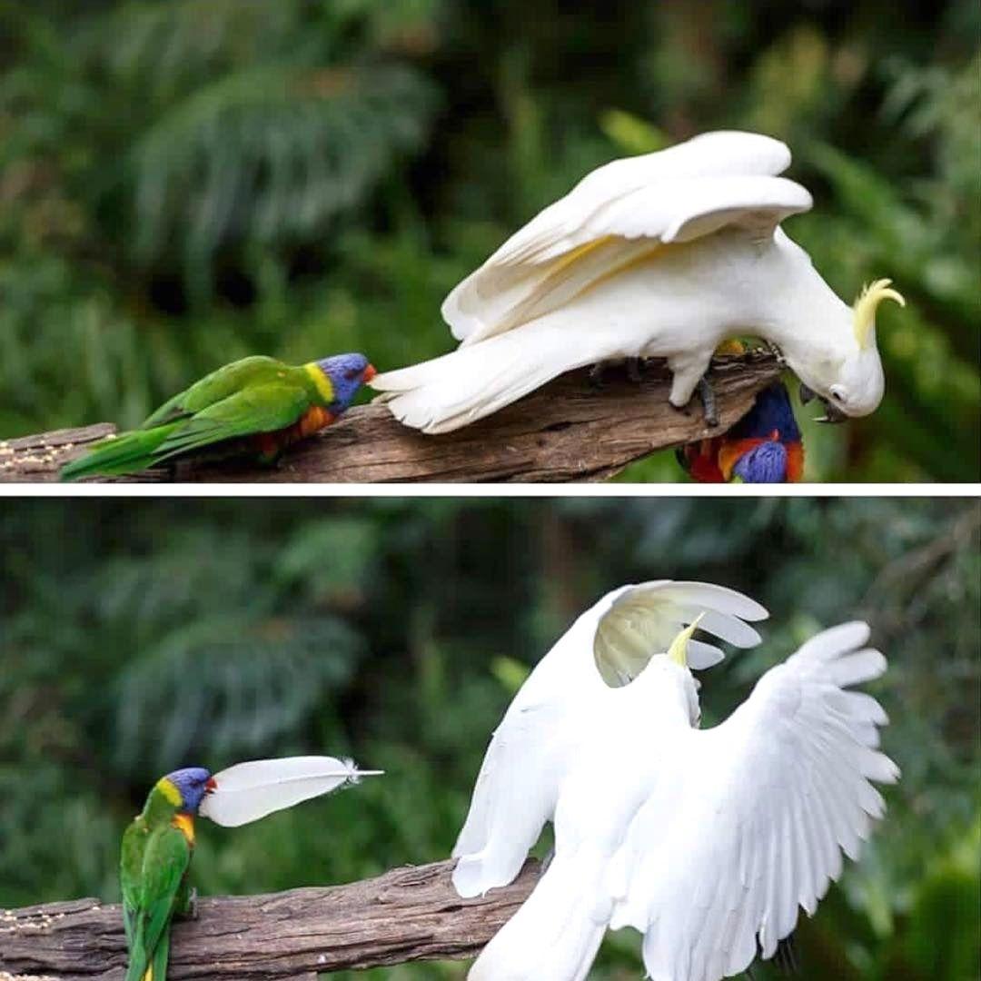 フォロワー人フォロー中人投稿件 u Bird Rulesさん