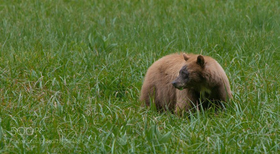 Meadow Dweller by WildlingPhoto via http://ift.tt/2g2BHl5