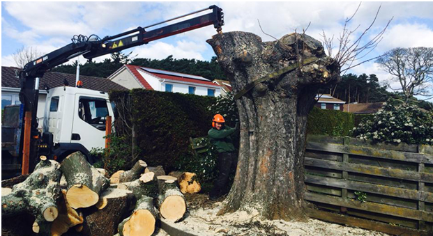 Get Professional Tree Surgeon Services At Very Affordable