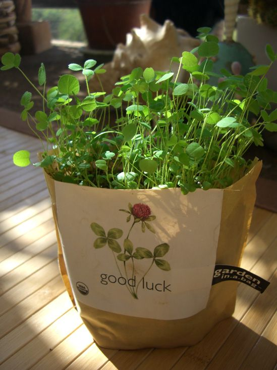Good Luck Clover Seeds Garden in a Bag Growing Kit
