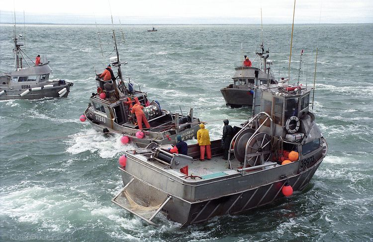 Gillnet fishing boats jockey for a spot to lay out their for Bristol bay fishing