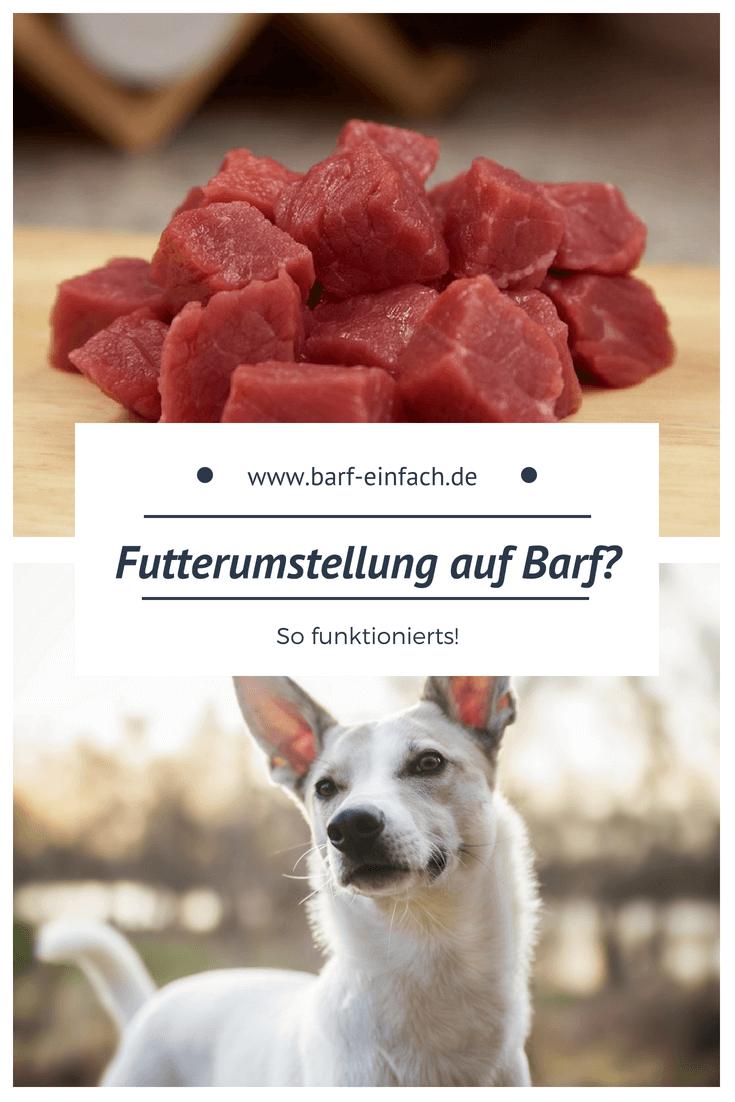 Umstellung Auf Barf Hunde Ernahrung Hundefutter Hunde Futter