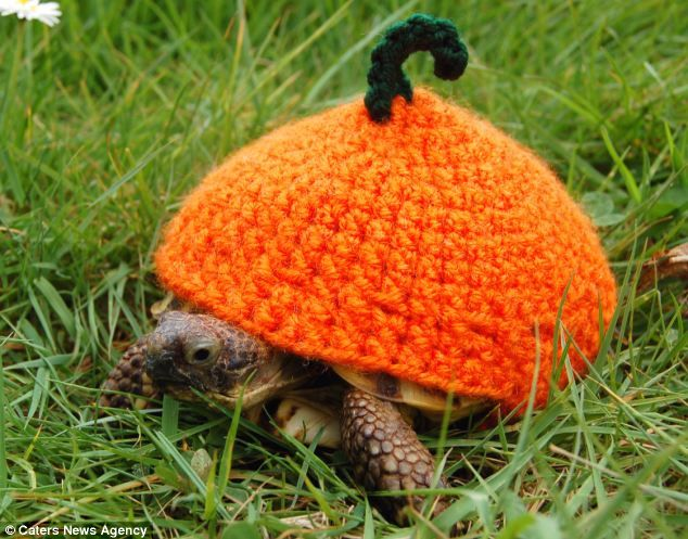 After posting pictures of the cosy designs on her tortoise blog she was soon inundated & Now thatu0027s what you call a shell suit! Tortoise owner knits dozens ...