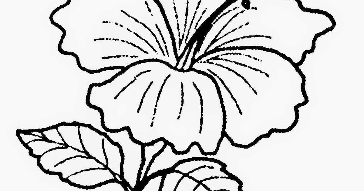 33 Gambar Bunga Sakura Kartun Hitam Putih Gambar Lukisan Bunga